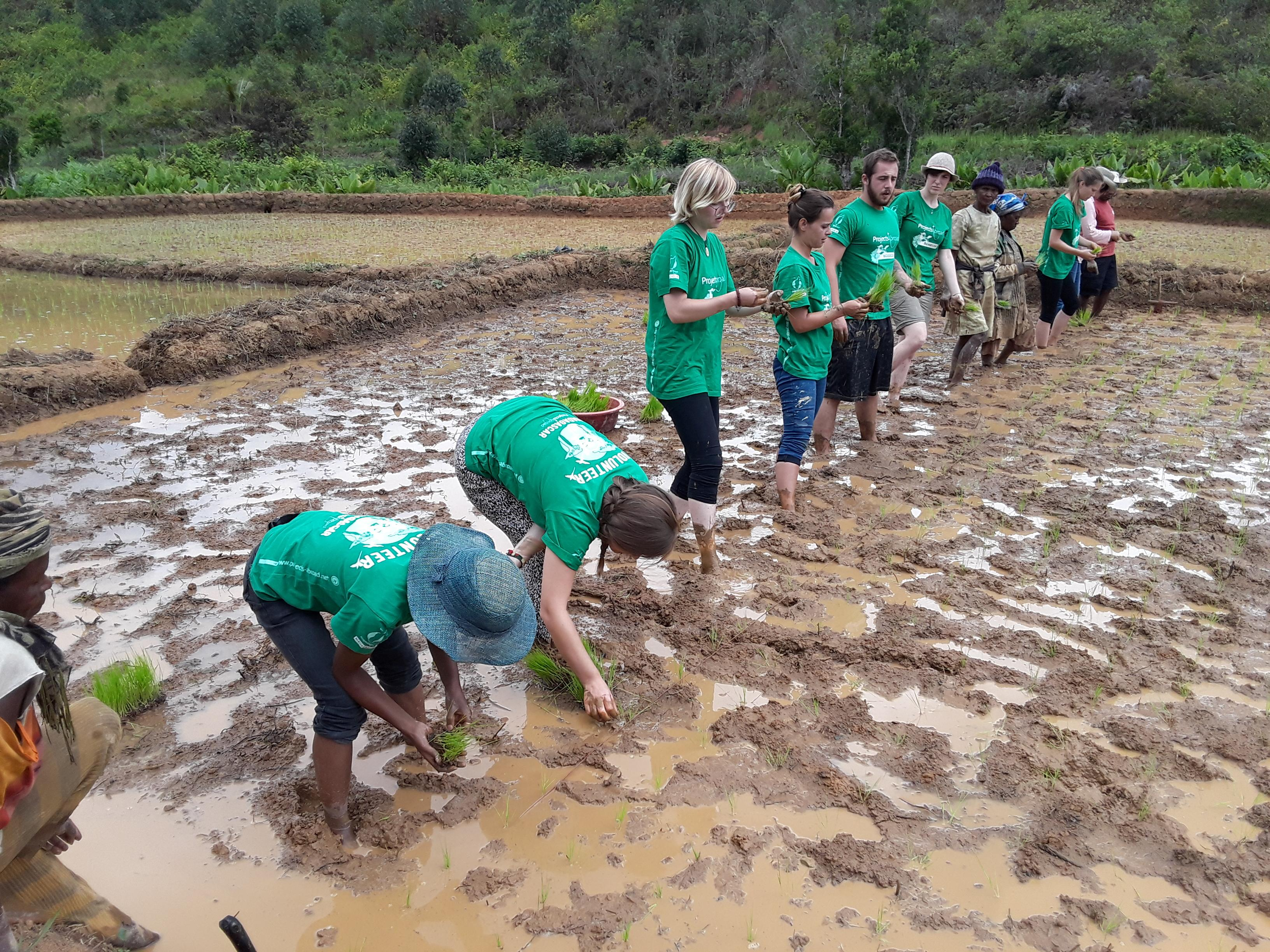 High school student volunteers help local farmers plant rice and promote rainforest conservation in Madagascar